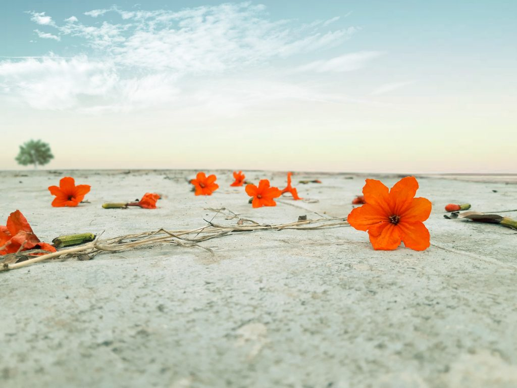 פרחים במדבר